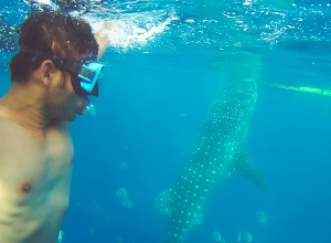 Butanding or Whale Shark Watching Experience in Oslob, Cebu