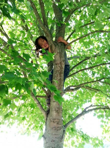 child-in-tree1