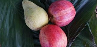 svezzamento dessert di mele e pere