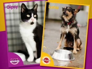 Kupnjom Whiskas i Pedigree-a pomažete napuštenim životinjama