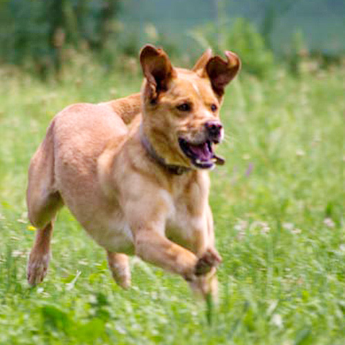 PluTrka: humanitarna utrka ljudi i pasa