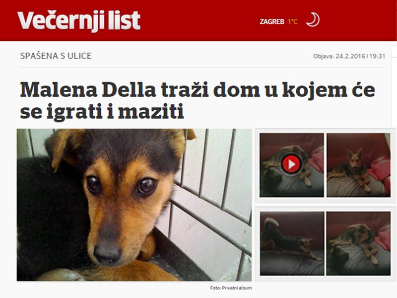 Malena Della traži dom - vecernji.hr