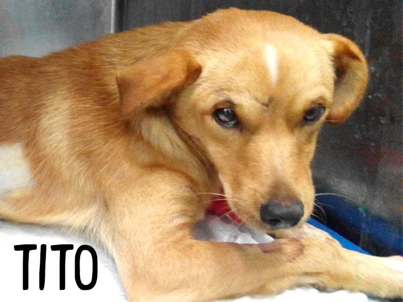 Priče iz našeg stacionara - Tito
