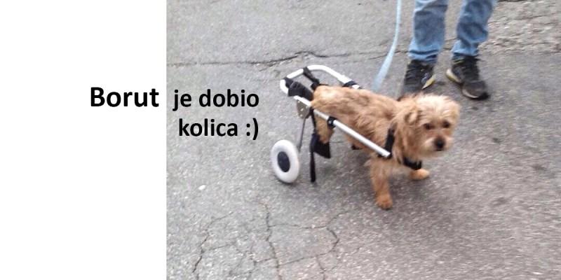 Borut je dobio kolica :)
