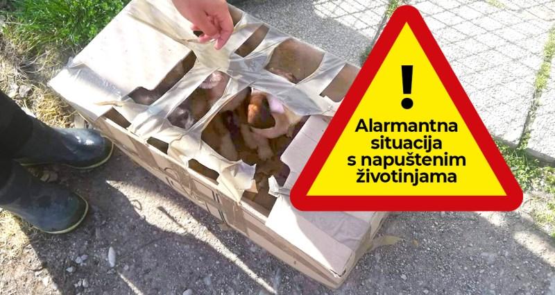 Alarmantna situacija s napuštenim životinjama