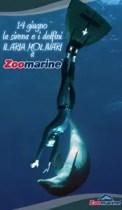 La-sirena-e-i-delfini-locandina