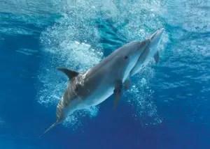Oltremare-laguna-delfini