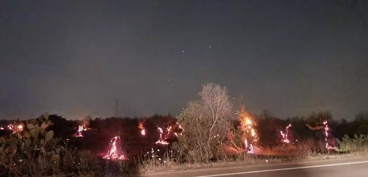 Ugento: incendi, trecento ettari di uliveti in fumo in quattro giorni Migliaia di alberi bruciati anche a Veglie, Ruffano, Casarano, Copertino e Gallipoli