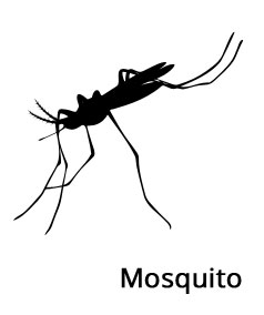 Image of a Mosquito on the No Insects Website