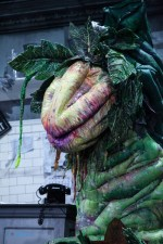 Audrey ll in Little Shop of Horrors. Photo by Ros O'Gorman