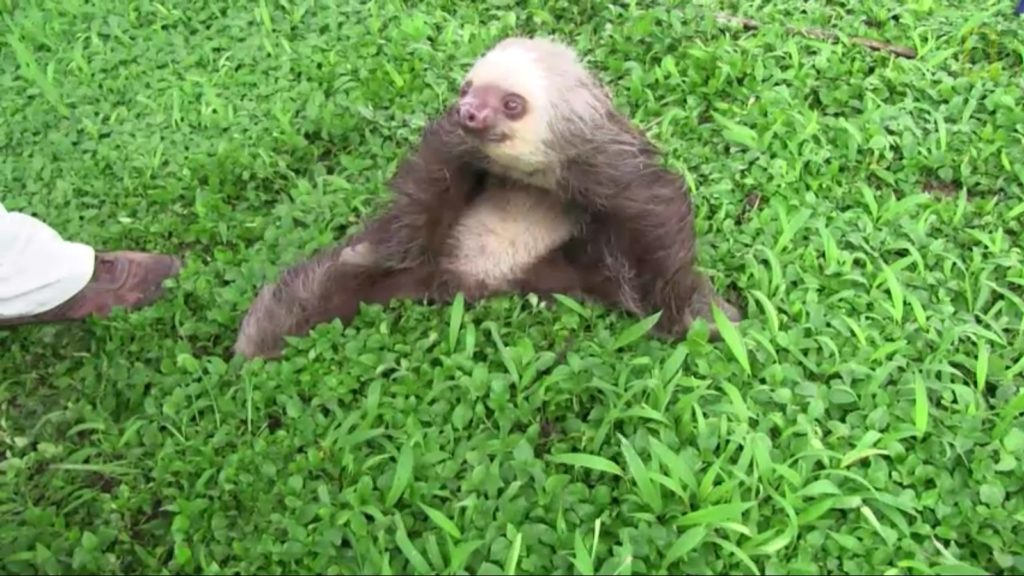 demon-possessed sloth (1)