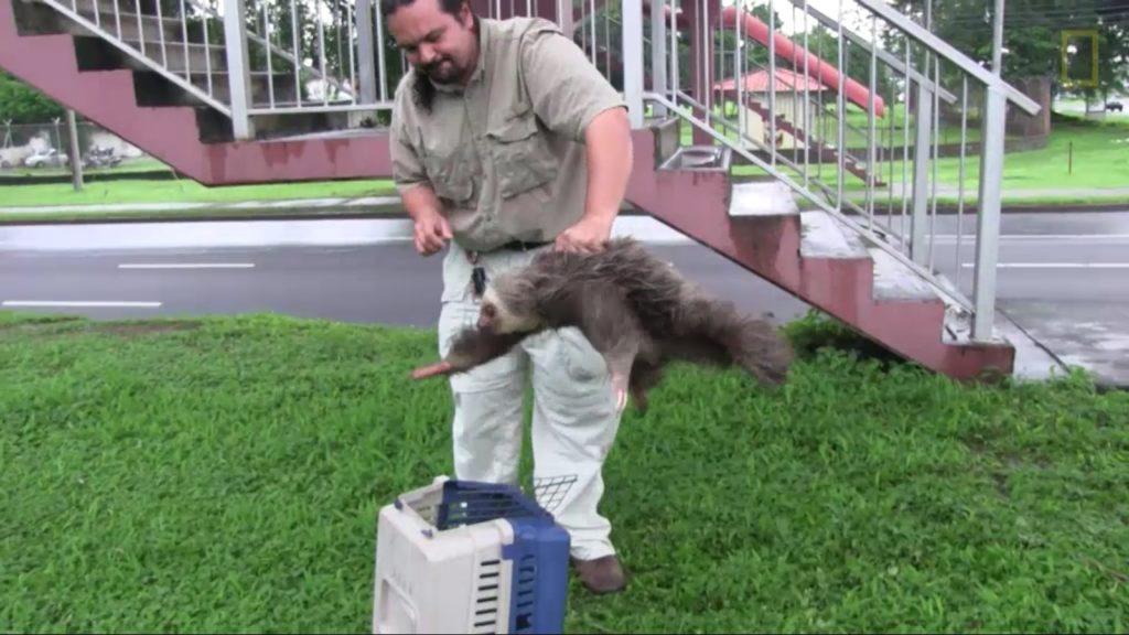 demon-possessed sloth (5)