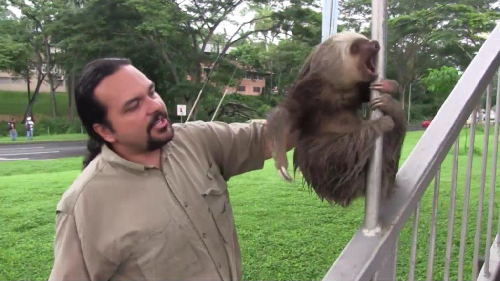 demon-possessed sloth (7)