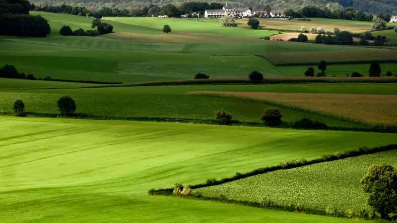 Comprare Terreni Agricoli: ecco come devi fare