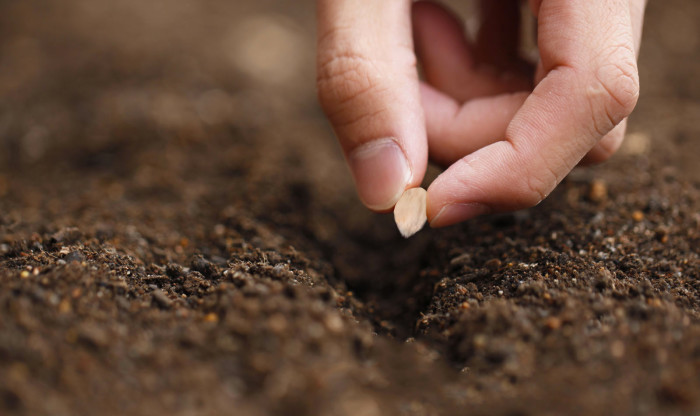 calendario delle semine