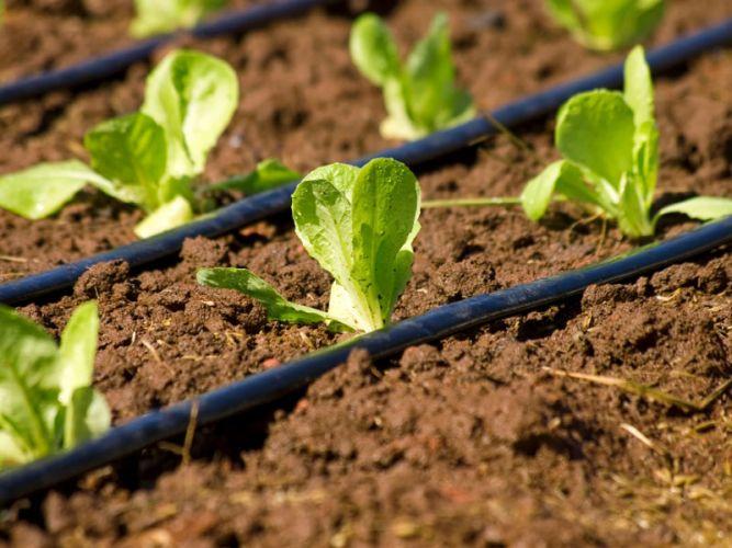 irrigazione a goccia