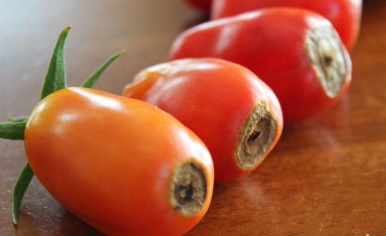 Marciume apicale del pomodoro