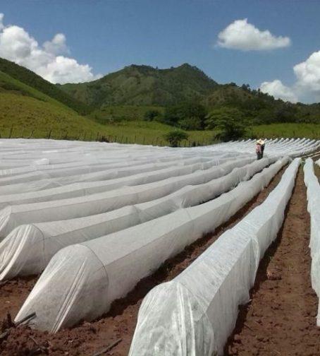 Tunnel Plastica Per Ortaggi.Agrotessili E Tunnel I Mezzi Di Protezione Per Le Colture Autunnali