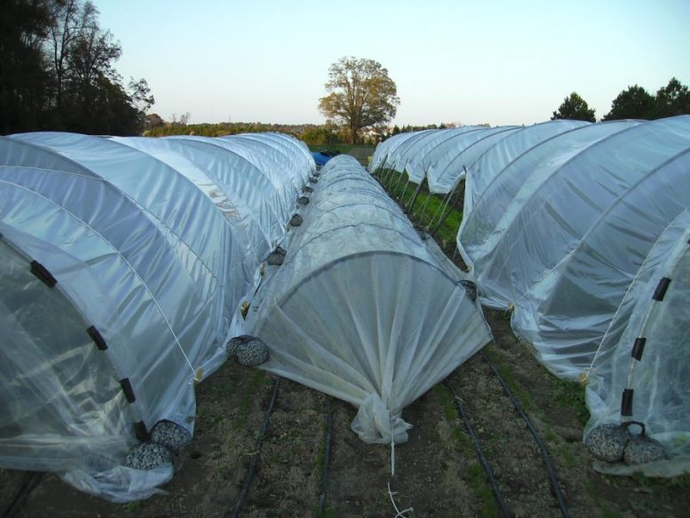 tunnel agricoltura