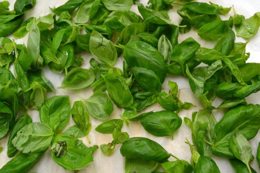 pesto alla genovese come lavare le foglie di basilico