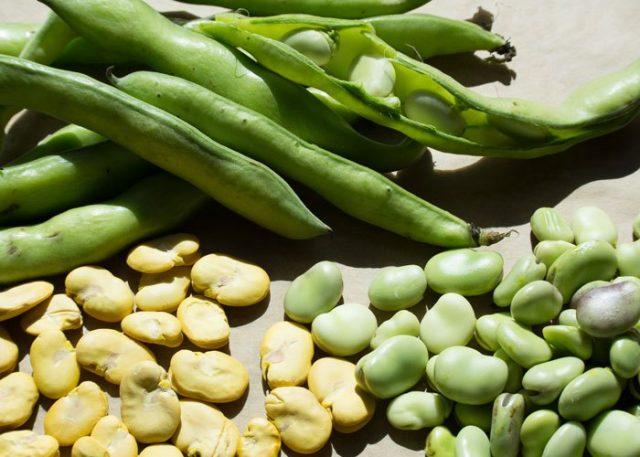 come coltivare la fava