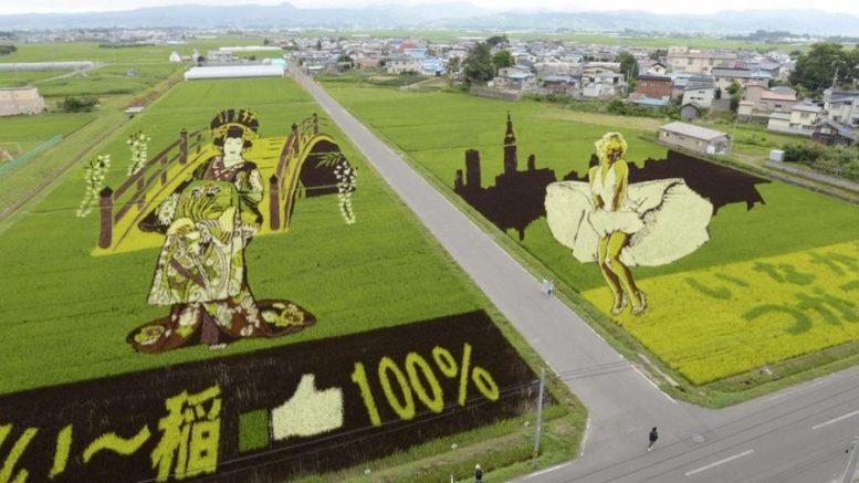 opere d'arte campi di riso