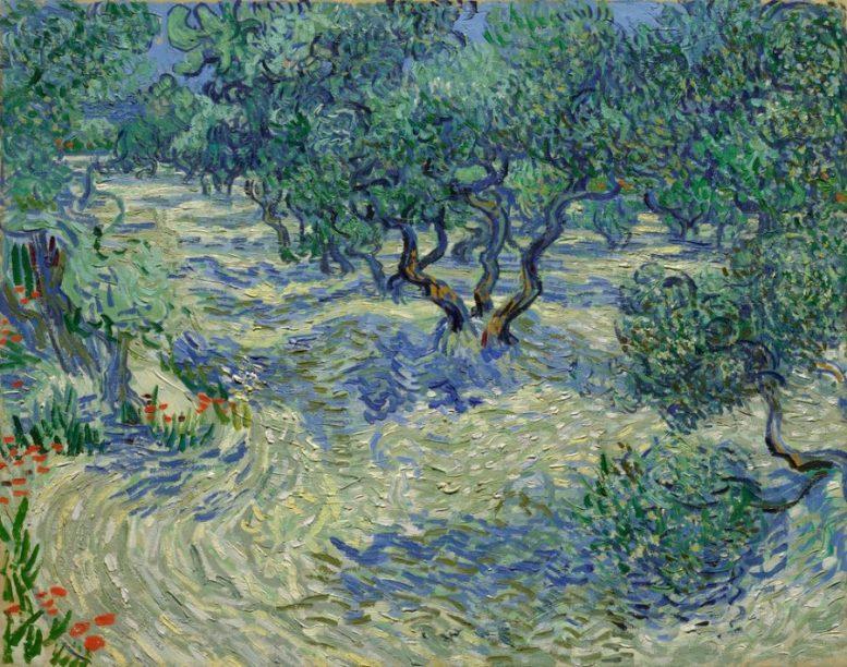 olive trees cavalletta van gogh