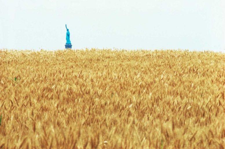 wheatfield campo di grano agnes denes manhattan