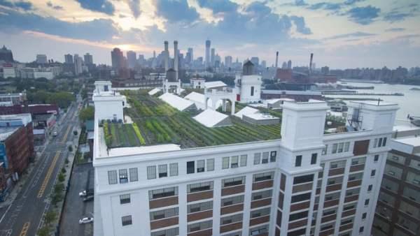 fattorie urbane - Brooklyn Grange