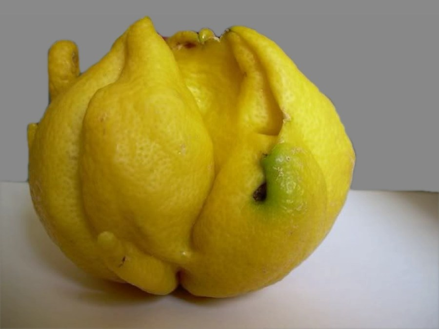 parassiti del limone