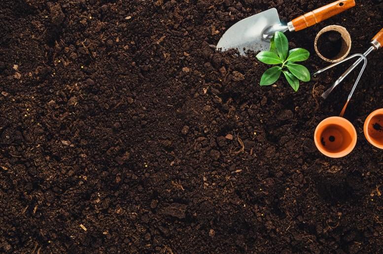 cosa coltivare con poco sole
