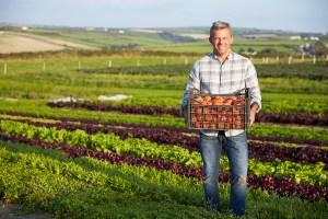 cosa coltivare con i pomodori