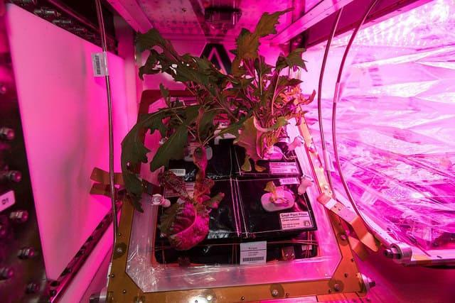 Missioni su Marte - HortExtreme per la missione Amadee18 in Oman