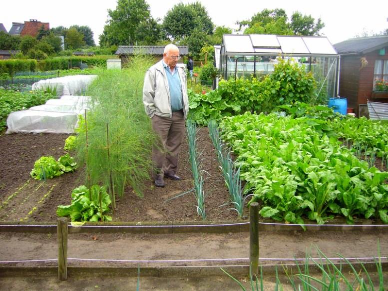 fertilizzante per orto biologico