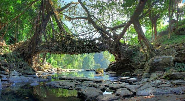 ponti-naturali-di-radici-di-Cherrapunjee-Mawaw-Root-Bridge