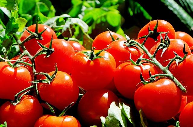 aumentare la resa dei pomodori da industria