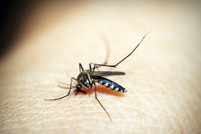 Rimedi naturali contro le punture di zanzare