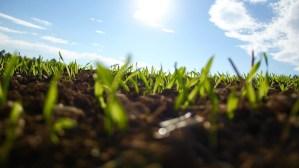 In questo articolo parleremo di una tecnica in uso già nel Medioevo e fondamentale ancora oggi: la rotazione delle colture