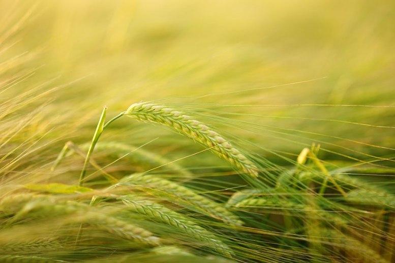 contributi per l'agricoltura