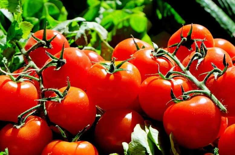 raccolta di pomodori