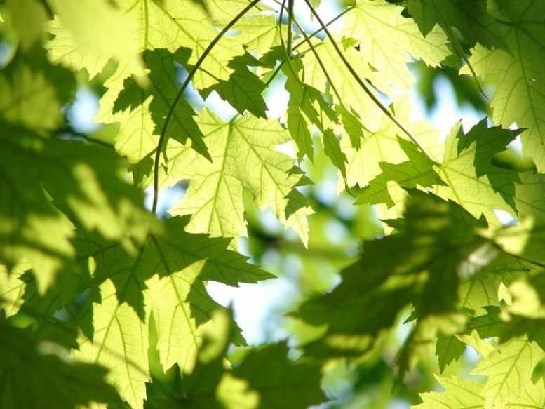 fertilizzante foglie