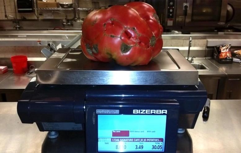 pomodoro gigante