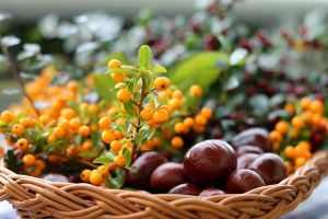 frutti dimenticati