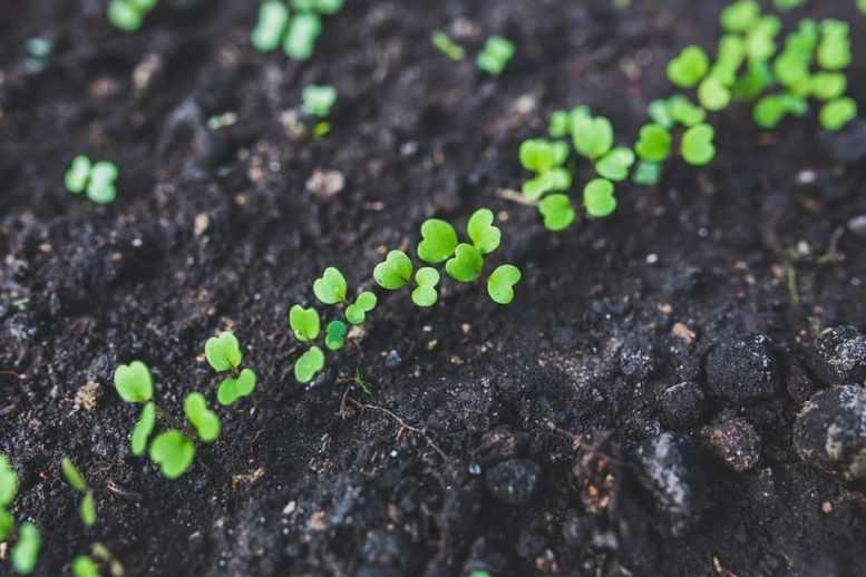 periodo migliore trapianto piante