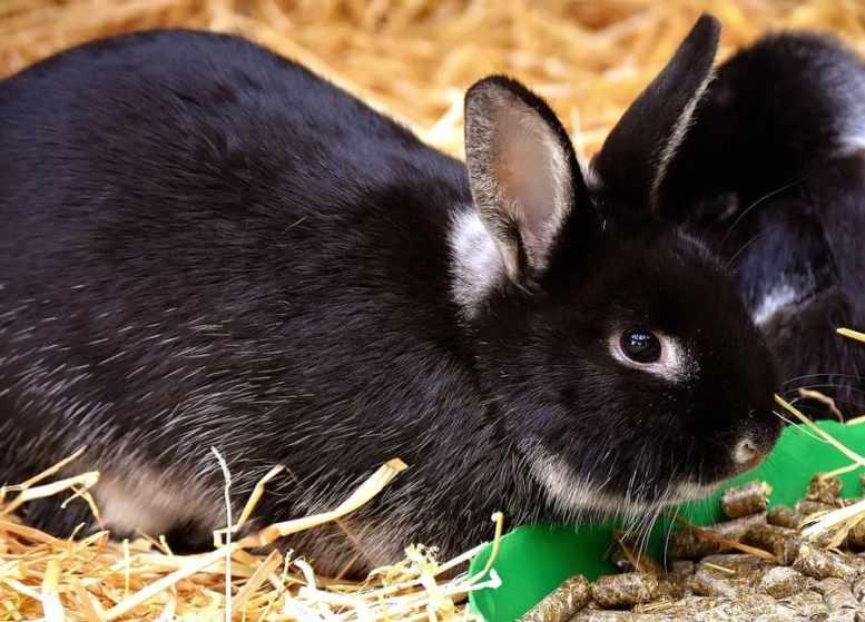 come curare coniglietti