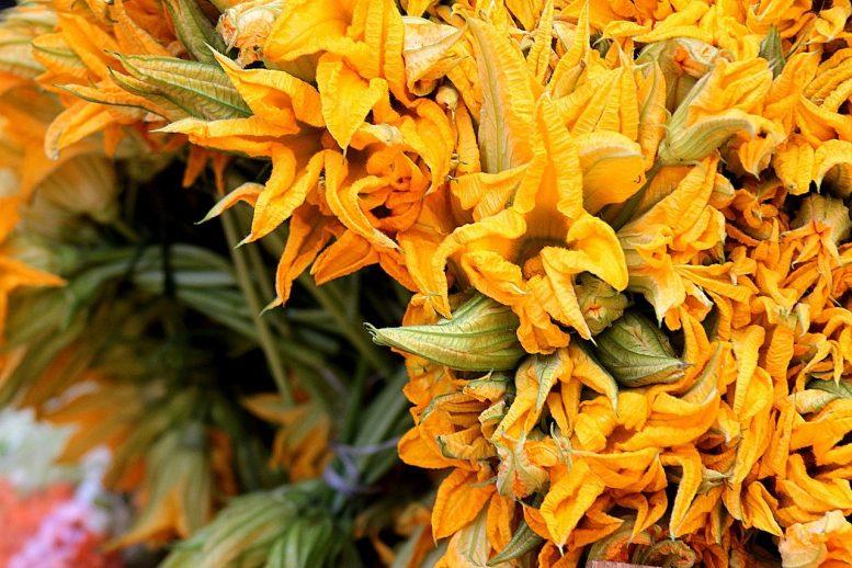 quando raccogliere i fiori di zucca