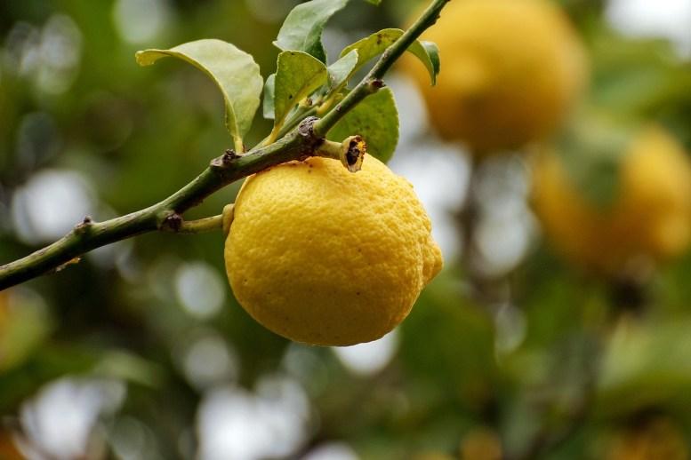 rinvaso del limone