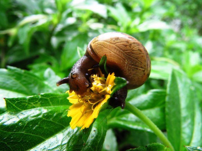lumache piante grasse