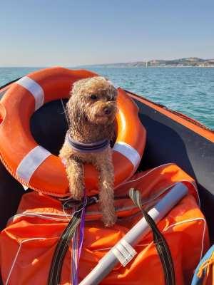 solare per cani