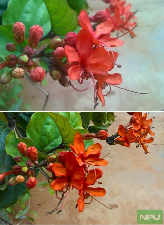 Lumia 525 vs 540 Colors